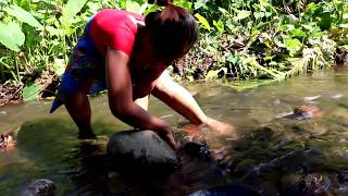 Survival skills: Catch insects water grilled on clay for food - Cook insects eating delicious #39