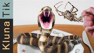 SPIDER AND SNAKE ATTACK | KLUNATIK COMPILATION ASMR eating sounds no talk ataque de araña serpiente