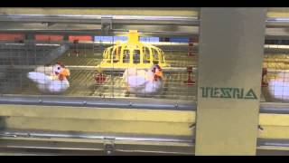 Robotized Bird Harvesting Equipment for Poultry Meet Production