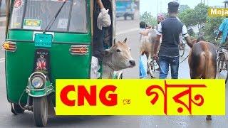 সিএনজি তে গরু নিমু | Bangla Funny Video | Bangla Prank EP 13 | Mojar Tv