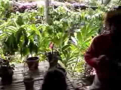 Teil.2 Ein Heiler Erklärt Die Medizinale Verwendung Verschiedener Heilpflanzen