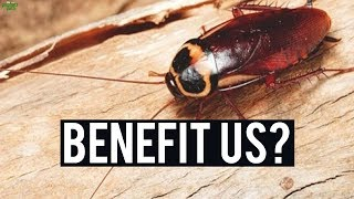 THIS IS HOW COCKROACHES & OTHER CREATURES BENEFIT US