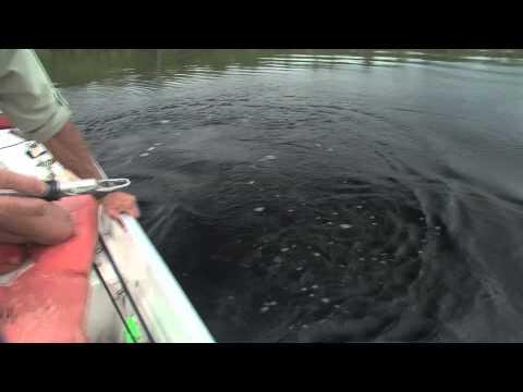 FISH FINDER TUCUNARE BRAZIL  RIO NEGRO