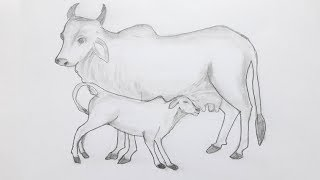 Cow and cattle drawing easy way/ Cow sketching by pencil