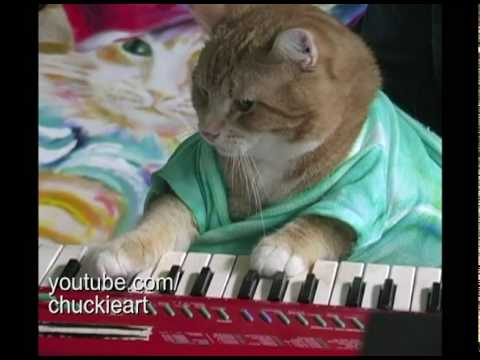 "Keyboard Cat! - ""Bento s Groove"""