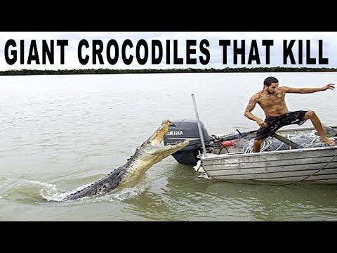 WORLD'S BIGGEST KILLER CROCODILES