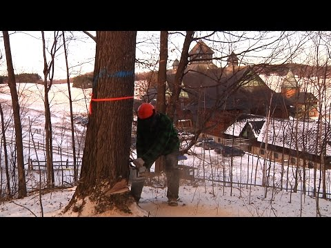 Lavigne Logging at Shelburne Farms [SIV297]