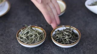 What is White Tea? An Introduction by Tea Master Xiao Mai