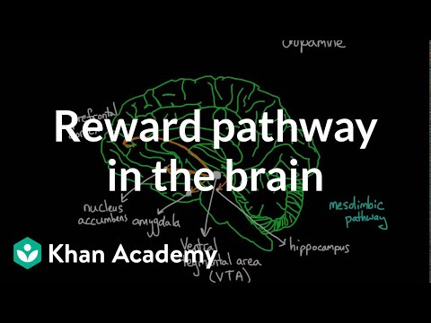 Reward pathway in the brain