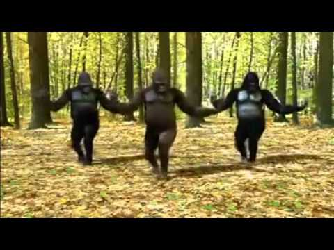 Singe Qui Danse - YouTube
