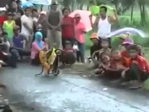 Monkey Dhoom Machale video