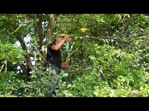 как ловить бродячие рои