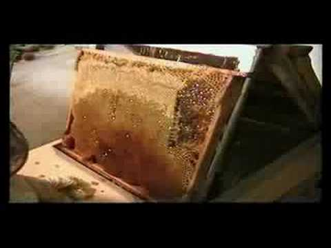 How It's Made   The Honey