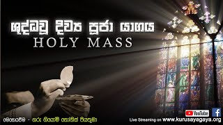 Morning Holy Mass - 24/11/2020