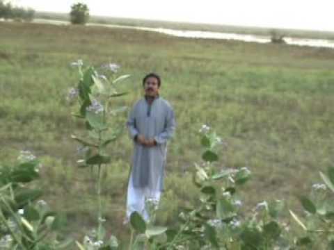 Atta Muhhad Niazi... Saara Saara Din Tere Bin video