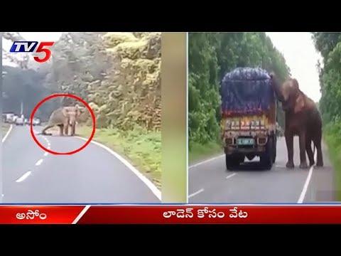 రాత్రి పూట గ్రామాలపై దాడికి పాల్పడుతున్న ఏనుగు | Elephant Hulchul In Assam | TV5 News
