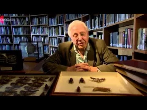 Attenborough's Natural Curiosities Season 2 Episode 4