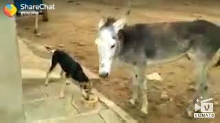 Best Funny/Animals funny 2018