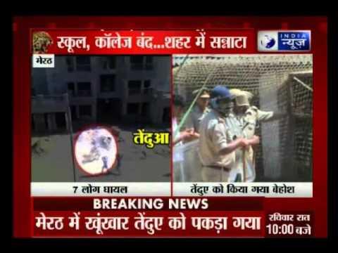 7 injured in leopard attack in Meerut
