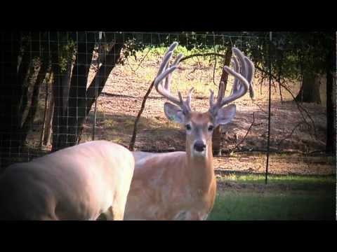 Get Ready To Rampage | Deer & Wildlife Stories