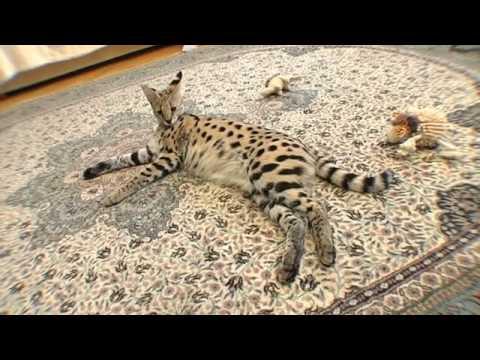 Мини животные в доме