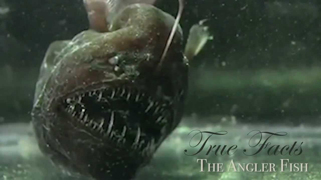 Real deep sea angler fish quotes for Angler fish habitat