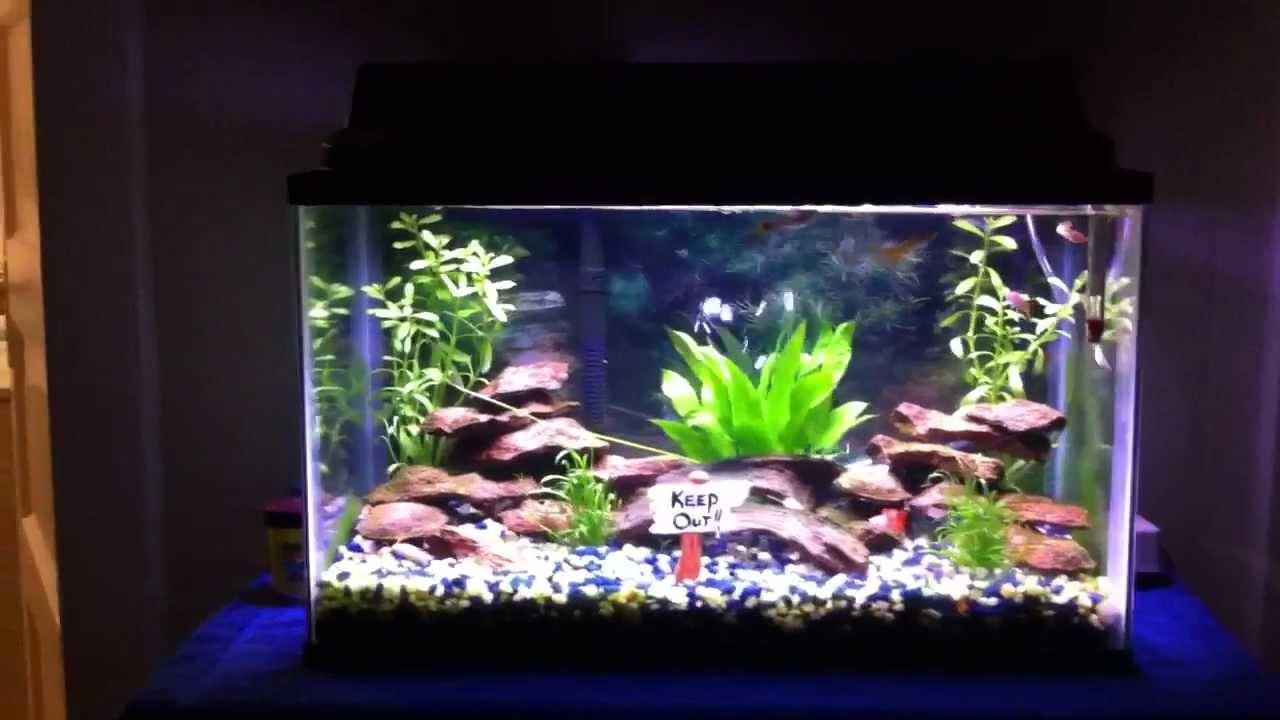 Guppy fish tank setup