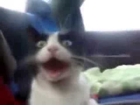 Funny Cats Compilation 2014 For Laughs - Xxx Cat Videos Compilation New video