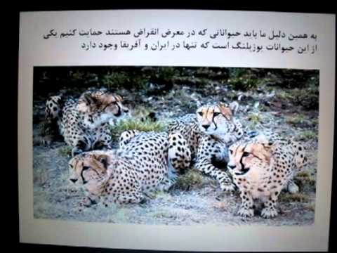 Saving Asiatic Cheetah in Iran