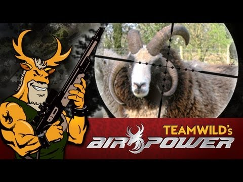 Extreme Airgun Hunting: Jacobs Four Horn Ram with Benjamin Rogue .357 Big Bore Air Rifle
