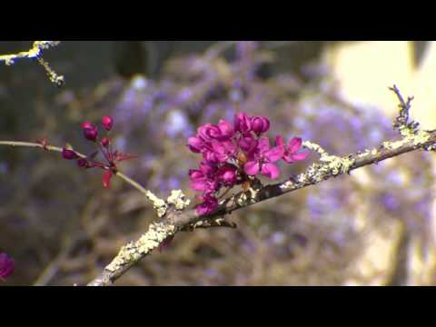 Relaxing nature scene and music therapy - Beautiful flowers of spring