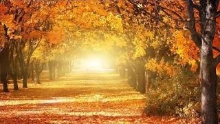Beautiful Relaxing Music Romantic Music Piano Music Violin Music Cello Music Sleep M