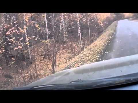 Чупакабра в Кировском лесу