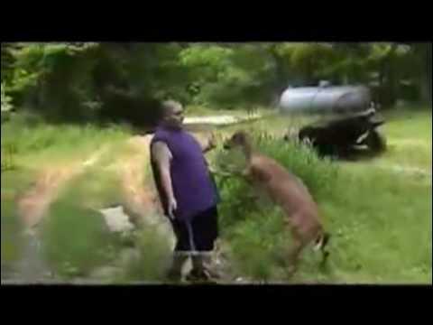 Deer Beats Up Fat Guy