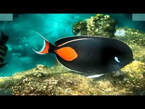 Sea Ocean Fish Fishes Under The Ocean