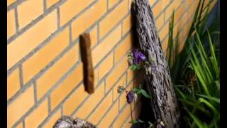 Wunder der Natur - Tanzendes Holz