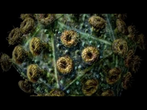 Virus Instrumental - Bjork (Biophilia)
