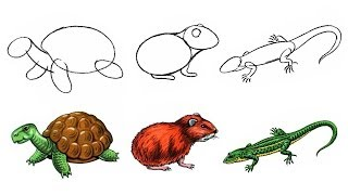 How to Draw Animals. Turtle Hamster Lizard