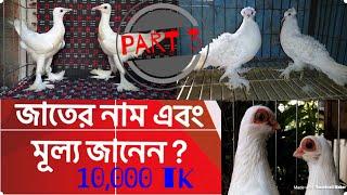 আপনি কি কবুতরের জাতের নাম এবং মূল্য জানেন? Do You know Pigeons Name And Price ? Part 3