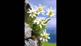 Watch Lhasa Sometimes It Hurts video