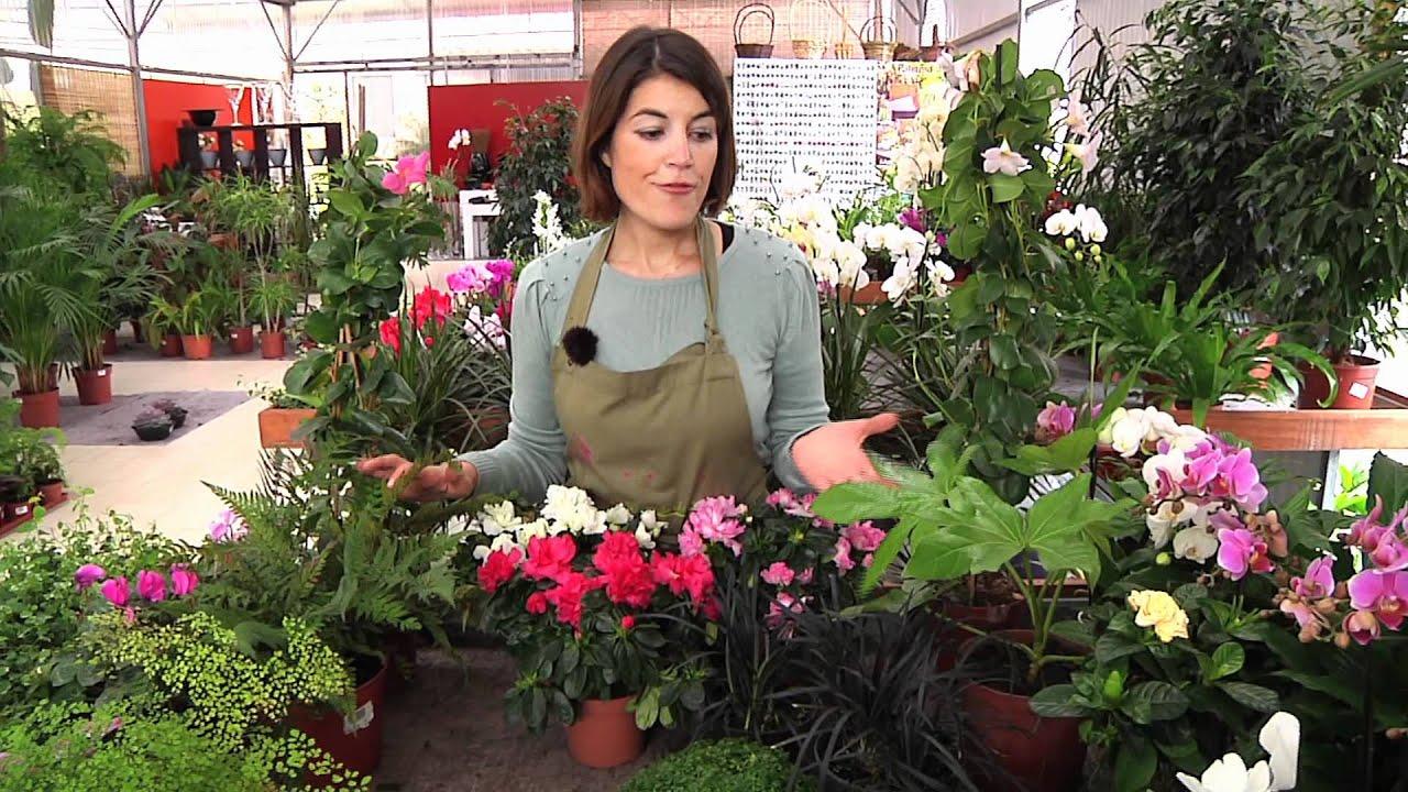 Nosso Jardim Flores de Sombra  YouTube