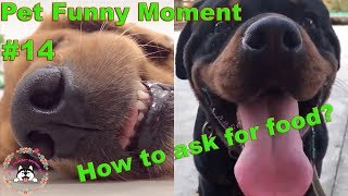 Funny animals EP14-How to ask for food-Pet Funny Moment
