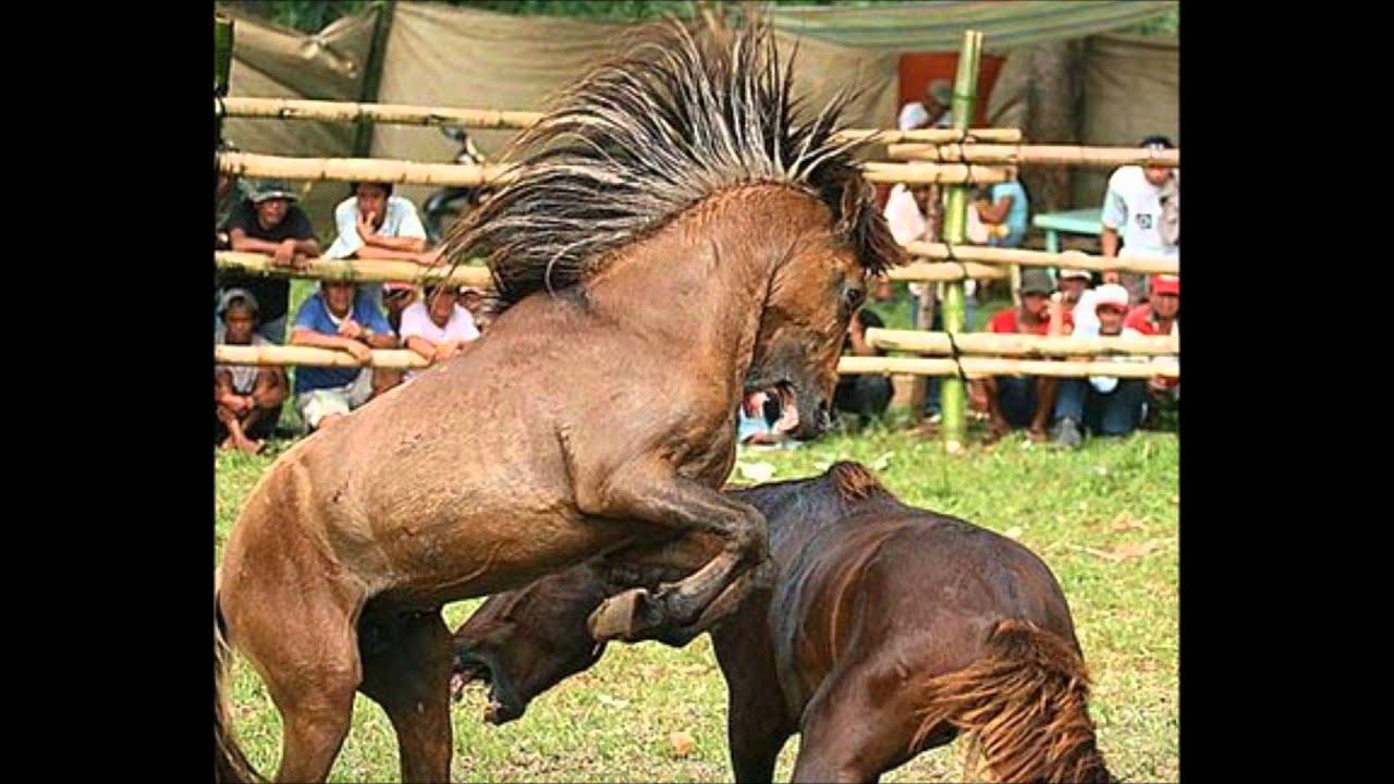 A Doosh Bagels Short - Charlie the Mutated Rabid Horse ...
