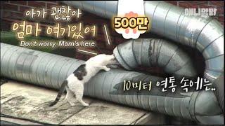 연통 속에 머리를 넣고 매일 우는 고양이.. 들여다보니 그곳엔 ㅣ Kitten Fell 10 Meters Down.. What The Mama Cat Can Do Is..?