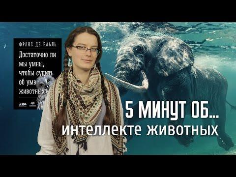 5 минут об интеллекте у животных