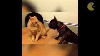 Funny cats video compilation