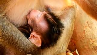 Bertha Breastfeed her daughter's Gino When Her mother breastfeed Want Sleepy,