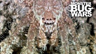 Grey Tree Runner Mantis Vs Lichen Huntsman Spider | MONSTER BUG WARS