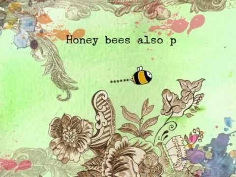The Last of the Honey bees