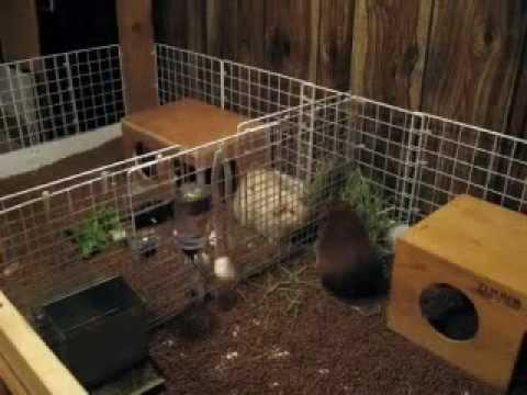Build a bigger cage cubes coroplast guinea pig cage c for Diy c c guinea pig cage